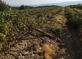 Καταστροφές σε καλλιέργειες σε Κάριανη και Τουζλα